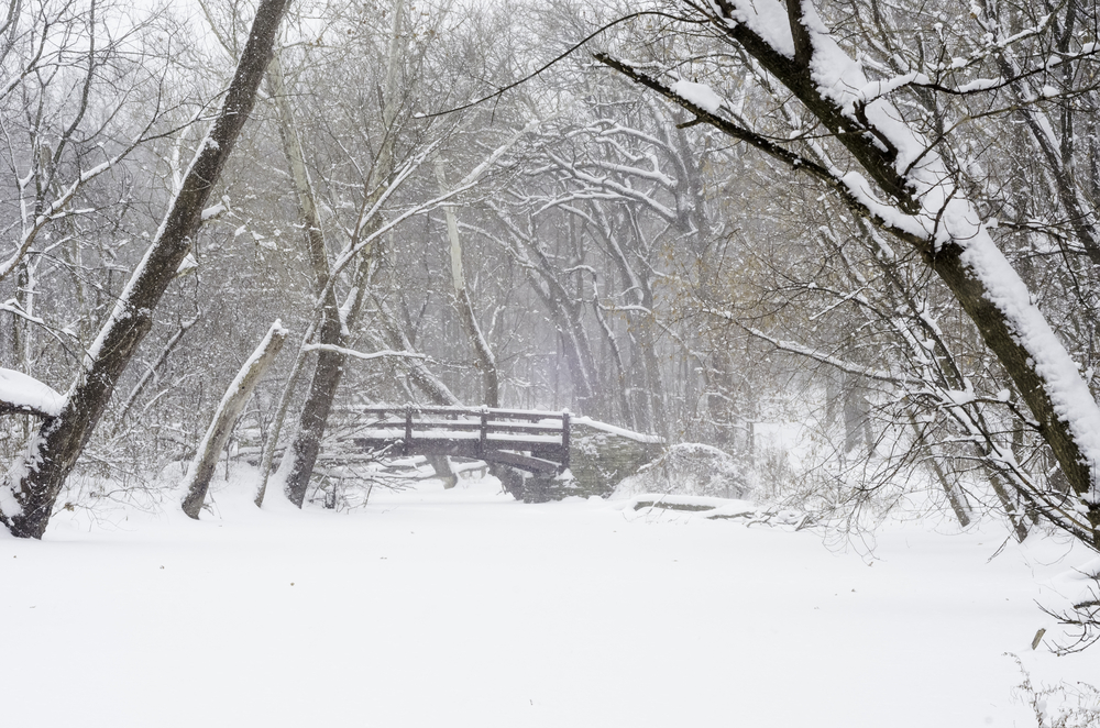 Wintry woods whiteout Footbridge over stream covered with snow during a winter storm in northern Illinois, USA