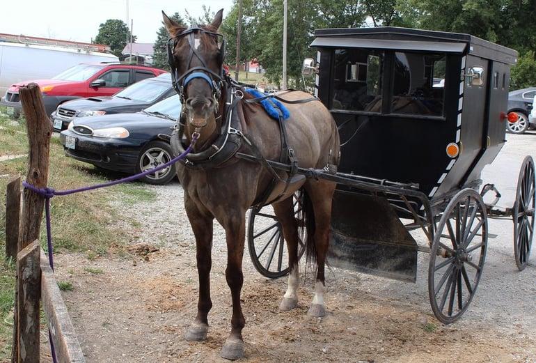horsemeat_jamesport_2_custom-c3620b0868579e2dd9e2517d122f1e16f2e34688-s900-c85.jpg
